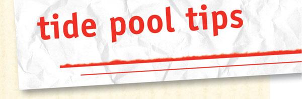 Tide Pool Tips