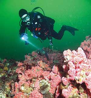 Scuba Diving Salish Sea